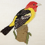 Western Tanager - FO039