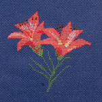 Mountain LIllies - FO052